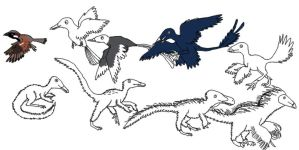 Hypothetical Evolution of Feather Distribution by Albertonykus