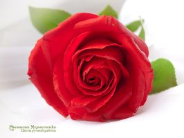 Red Rose - Polymer Clay Flowers by Vakhara