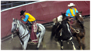 - Rodeo Horses - by Cam-lou-photos