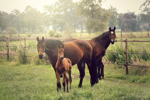 Horse family by Twistereli