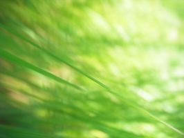 Grass Macro by Seattle-Storm