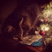 The Cat Who Stole Christmas by ToxiClean