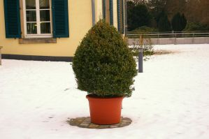 Boxwood I by expression-stock