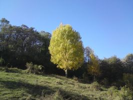 Tree in autumn by maminscris