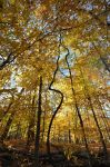 Fall Forest Stock by little-spacey