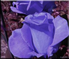 And more blue by Brigitte-Fredensborg