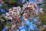 Blossom flower stock by CathleenTarawhiti