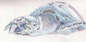 Sea Turtle by Moondancer3