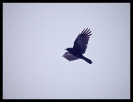 The Crow by OliverBPhotography