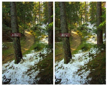 3D.forestpath - crossview by yatu-ex