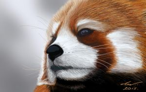 Red Panda 2 by niveky