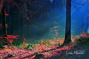 Bosque HDR by LuisAlbano