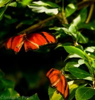 Butterfly Coitus by kaiya880