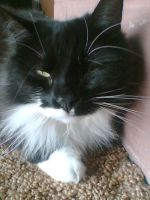 My cat April by our-lady-of-sorrows1
