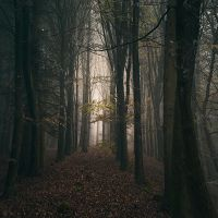 From Darkness to Light by Oer-Wout