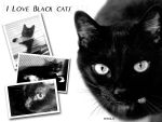 i love Black Cats by nnia