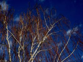 Dead Willow Tree.. by cryptwish
