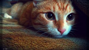 My Lovely Ginger Cat by UkkiRainbow