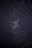 drops on spiderweb by hope05
