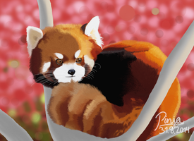 Red Panda by TheShadowEmpress