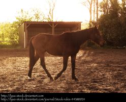 Horse 04 by Lyxa-Stock