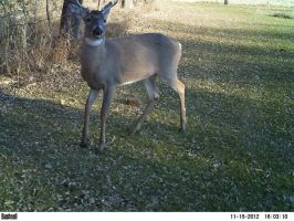 Trail Cam Buck! by Misted-Dream