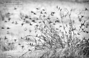 Ebb and Flow by MorkelErasmus