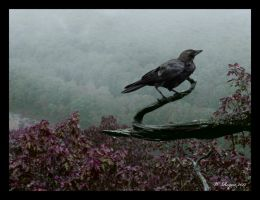 crows view by wroquephotography