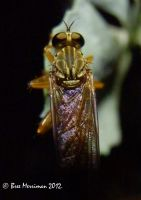 Robber Fly Macro by BreeSpawn