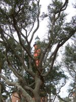 light house in trees by JillyFoo