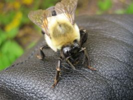 Lost Little Bumble Bee 3 by GeminiGirl83