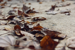 Leaf Stains 5 by softmist93