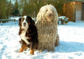 two dogs in the snow by Nexu4