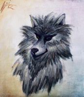 Wolf by ColourChromaticism