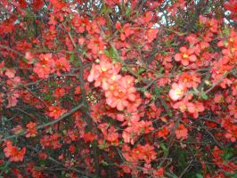 Red flower bush by baby-wicca89