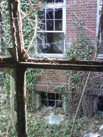 Ivy out the Window by blackmariah27