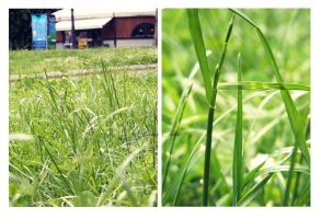 Green Grass by ObscureChaos