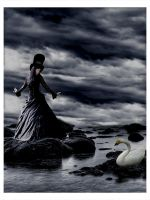 Le cygne by Flore-stock