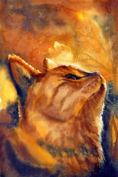 Ginger cat by Verenique