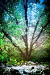 Tree of Dreams by OlivierAccart