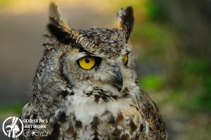 Eagle owl by Seth890603