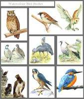 Bird studies by markstewart