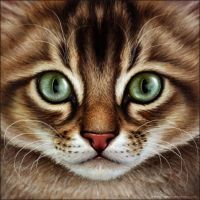 Warrior Cats - Brown Tabby by Wynnyelle