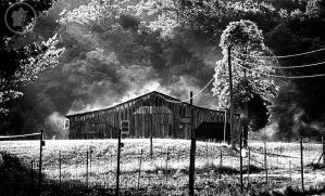 Fog on the barn by DARRYL-SMITH