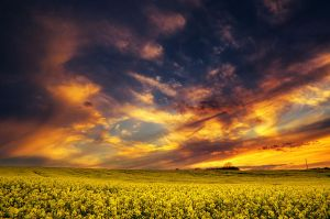 The Luminous Landscape XXV. by realityDream