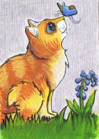 Ginger tom funny cat butterfly ACEO by Zoid by KingZoidLord