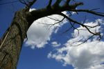 tree and sky by lizsphoto91