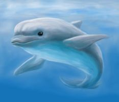 Bottlenose Dolphin by Sherushi
