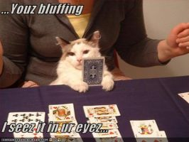 lolcat - Bluffing by Realmotta
