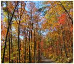 Ring of Fire -  Autumn - Flats Rd-  2012 by CrystalMarineGallery